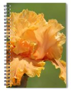 Tall Bearded Iris Named Penny Lane Spiral Notebook