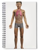 The Lungs Within The Body Pre-adolescent Spiral Notebook