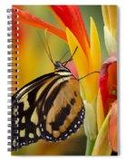 The Postman Butterfly Spiral Notebook