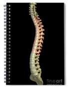 The Thoracic Vertebrae Spiral Notebook