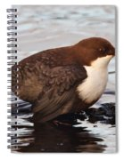 The White-throated Dipper Spiral Notebook