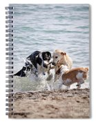 Three Dogs Playing On Beach Spiral Notebook