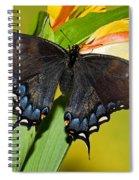 Tiger Swallowtail Butterfly, Dark Phase Spiral Notebook