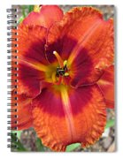 Tigger Daylily Spiral Notebook
