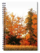 Trees Of Fall Spiral Notebook