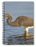 Tri-colored Heron Spiral Notebook