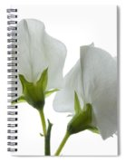 Two White Sweet Peas 2 Spiral Notebook