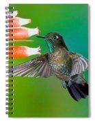 Tyrian Metaltail Spiral Notebook