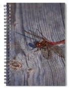 Vagrant Darter Spiral Notebook