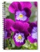 Viola Named Sorbet Plum Velvet Jump-up Spiral Notebook