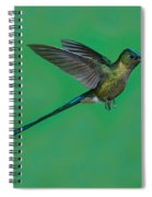 Violet-tailed Sylph Spiral Notebook