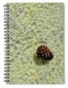 Visual Gift Spiral Notebook