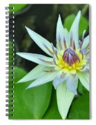 Water Lily  3 Spiral Notebook
