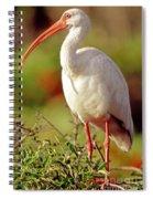 White Ibis Eudocimus Albus Spiral Notebook