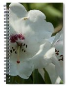 White Rhododendron Blossom Spiral Notebook