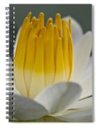 White Water Lily Spiral Notebook