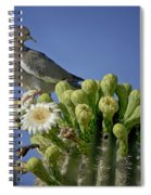 White-winged Dove Atop A Saguaro Spiral Notebook