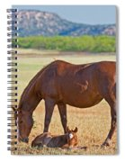 Wild Horses Mother And Foal Spiral Notebook