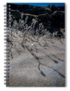 Woolly Willow Growing Wild In The Black Spiral Notebook