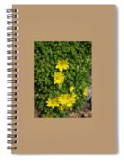 Yellow Ice Plant In Bloom Spiral Notebook