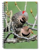 Yellow-shafted Northern Flickers Spiral Notebook