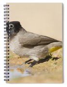 Yellow-vented Bulbul Pycnonotus Xanthopygos Spiral Notebook