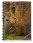 Young Mulie Spiral Notebook