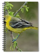 Young Orchard Oriole Spiral Notebook
