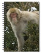 Japanese Macaque Spiral Notebook