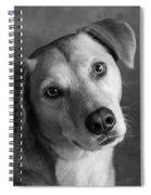 Portrait Of Red Bone Coon Mix Dog Spiral Notebook