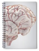 Brain With Blood Supply Spiral Notebook