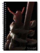 Head Louse Spiral Notebook