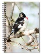 Rose Breasted Grosbeak Spiral Notebook