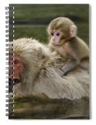 Snow Monkeys, Japan Spiral Notebook