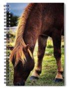 24 Carrot Spiral Notebook