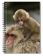 Snow Monkeys Japan Spiral Notebook