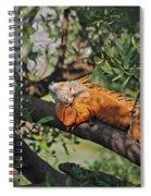 25- Iguanas Spiral Notebook