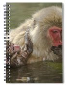 Snow Monkeys, Japan Spiral Notebook