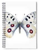 28 Apollo Butterfly Spiral Notebook