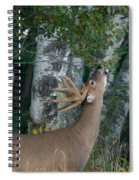 White-tailed Buck Spiral Notebook