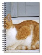 Cat In Hydra Island Spiral Notebook