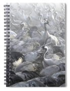 Flock Of Common Crane  Spiral Notebook