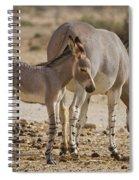 African Wild Ass Equus Africanus Spiral Notebook