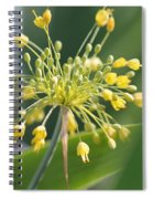 Allium Flavum Or Fireworks Allium Spiral Notebook
