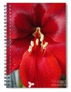 Amaryllis Named Black Pearl Spiral Notebook