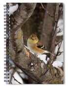 American Goldfinch In Winter Spiral Notebook