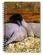 3 Animals Spiral Notebook