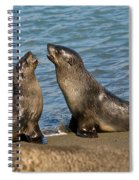 Antarctic Fur Seals Spiral Notebook