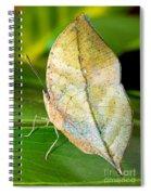 Autumn Leaf Butterfly Spiral Notebook