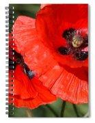 Beautiful Poppies 2 Spiral Notebook